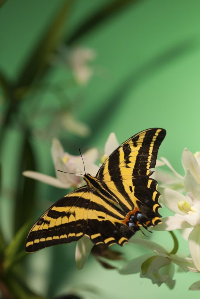 Prague Botanical Garden - butterfly at the exhibiton at Fata Morgana greenhouse